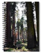 Sequoia National Park Spiral Notebook