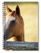 Single Horse Spiral Notebook