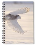 Snowy Owl In Flight Spiral Notebook