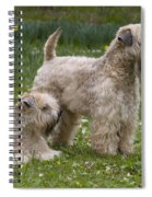 Soft-coated Wheaten Terriers Spiral Notebook