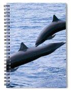 Spinner Dolphins Spiral Notebook