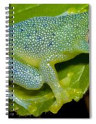 Spiny Glass Frog Spiral Notebook