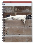 Street Dog Sleeping On Steps Spiral Notebook