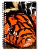 Surinam Coralsnake Spiral Notebook