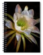 The Inner Beauty  Spiral Notebook