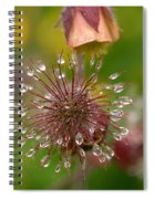 Water Avens Spiral Notebook