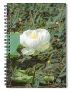 White Lotus Flower Flower Lotus Nature Summer Green Plant Blossom Asian Spiral Notebook