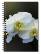 White Orchid - Doritaenopsis Orchid Spiral Notebook