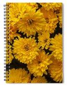 Yellow Chrysanthemums Spiral Notebook