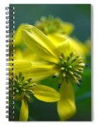 Yellow Wingstem Spiral Notebook