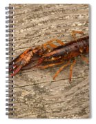 Young Lobster Spiral Notebook
