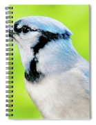 Blue Jay, Animal Portrait Spiral Notebook