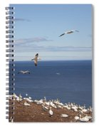 Gannet Colony Spiral Notebook