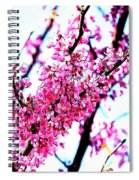 2016-03-18 Redbud Tree In Bloom Spiral Notebook