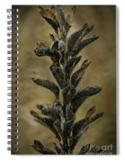 2016 Horicon Marsh - Seed Pods Unfurled Spiral Notebook