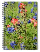 201703300-068 Indian Paintbrush Blossom 2x3 Spiral Notebook