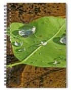 2018 08 31 Sign  H2o Leaf Img_5999 Spiral Notebook