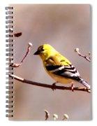 2164 - Goldfinch Spiral Notebook