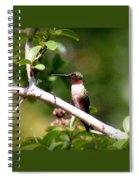 2274 - Hummingbird Spiral Notebook