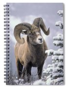 25084, Bighorn Sheep, Winter, Jasper Spiral Notebook