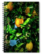 2644- Lemon Tree Spiral Notebook