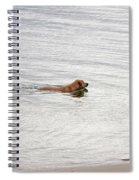 3 - Golden Lab Lovin Life Spiral Notebook