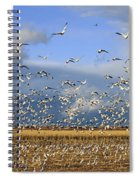 A Panoramic Of Thousands Of Migrating Spiral Notebook