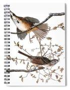 Audubon: Sparrow, (1827-38) Spiral Notebook