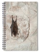 Bats Inside The Pyramid At Grupo Nohoch Mul At The Coba Ruins  Spiral Notebook