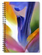 3 Bird Of Paradise Macro Spiral Notebook