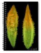 Bitter Melon Fruit, X-ray Spiral Notebook