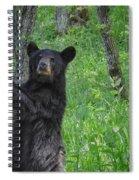 Black Bear Yearling Spiral Notebook