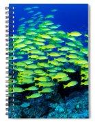Bluestripe Snapper Spiral Notebook