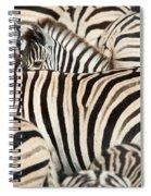 Burchells Zebras Equus Quagga Spiral Notebook