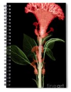 Cockscombs Flower, X-ray Spiral Notebook