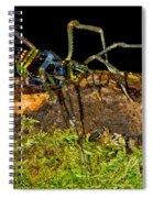 Colorful Harvestman Spiral Notebook
