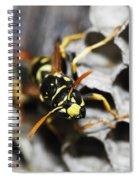 Common Wasp Vespula Vulgaris Spiral Notebook