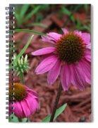 Coneflower Spiral Notebook