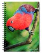 Crimson Rosella Spiral Notebook