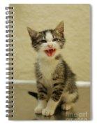3 Day Old Kitten Spiral Notebook