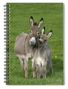 Donkey Mother And Young Spiral Notebook