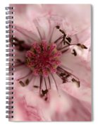 Double Dusty Rose Poppy From The Angel's Choir Mix Spiral Notebook