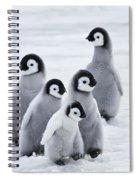Emperor Penguin Chicks Spiral Notebook