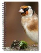 European Goldfinch Bird Close Up   Spiral Notebook