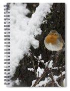 European Robin Erithacus Rubecula Spiral Notebook