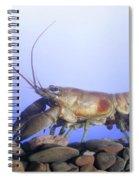 Female Rusty Crayfish Spiral Notebook