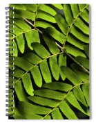 Fern Close-up Of Water Droplets  Spiral Notebook