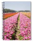 field of cultivated Buttercup  Spiral Notebook