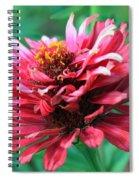 Fuchsia Pink Zinnia From The Whirlygig Mix Spiral Notebook