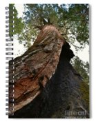 Giant Sequoia Trees Spiral Notebook